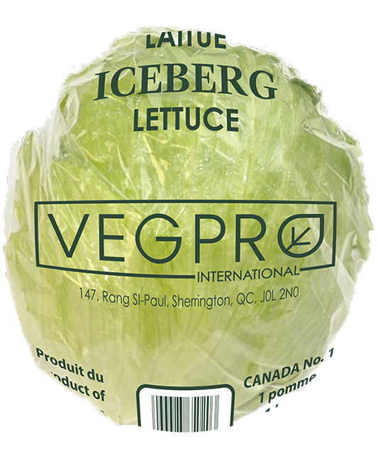 Laitue Iceberg