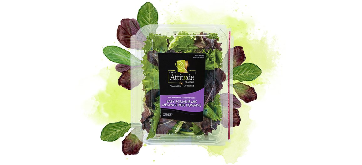 fresh attitude baby romaine blend 5oz watercolor