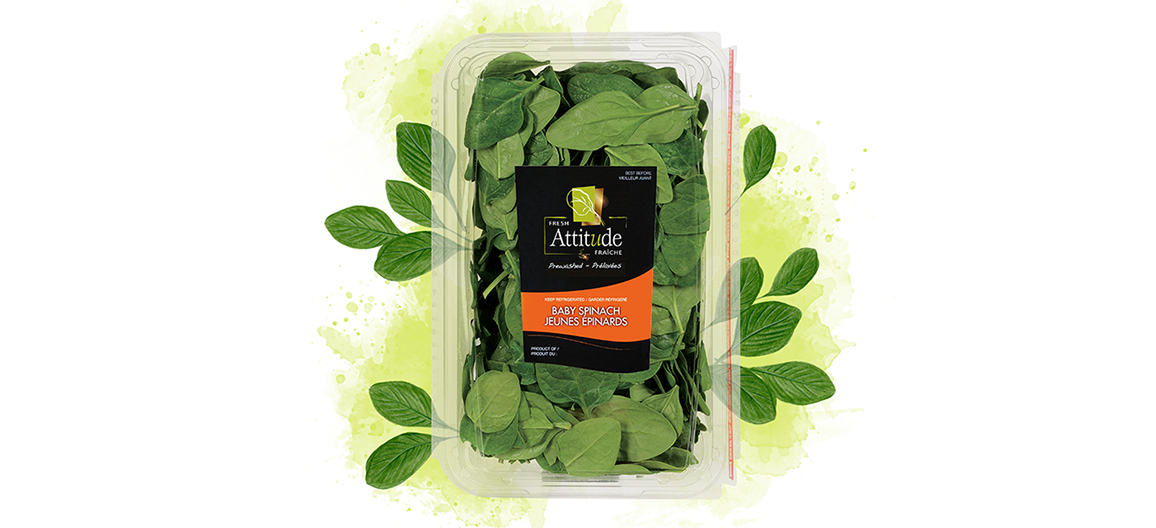 fresh-attitude-baby-spinach-11oz-watercolor
