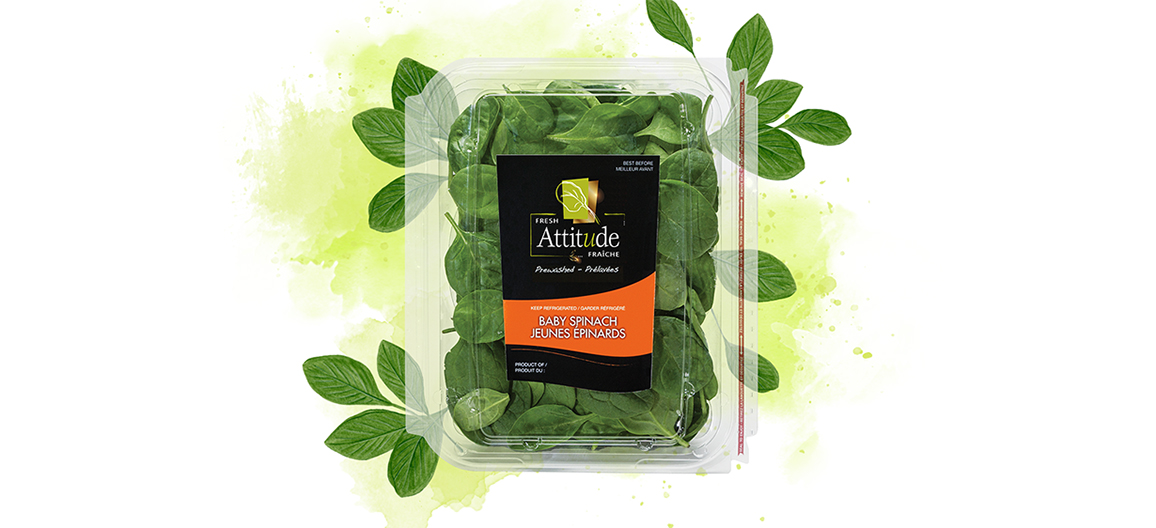 fresh-attitude-baby-spinach-5oz-watercolor